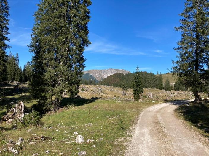 Wandern Feldwiesalm